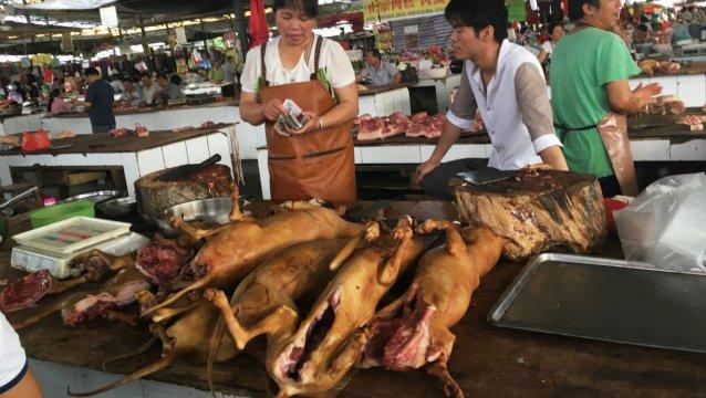 commerçant de viande chien