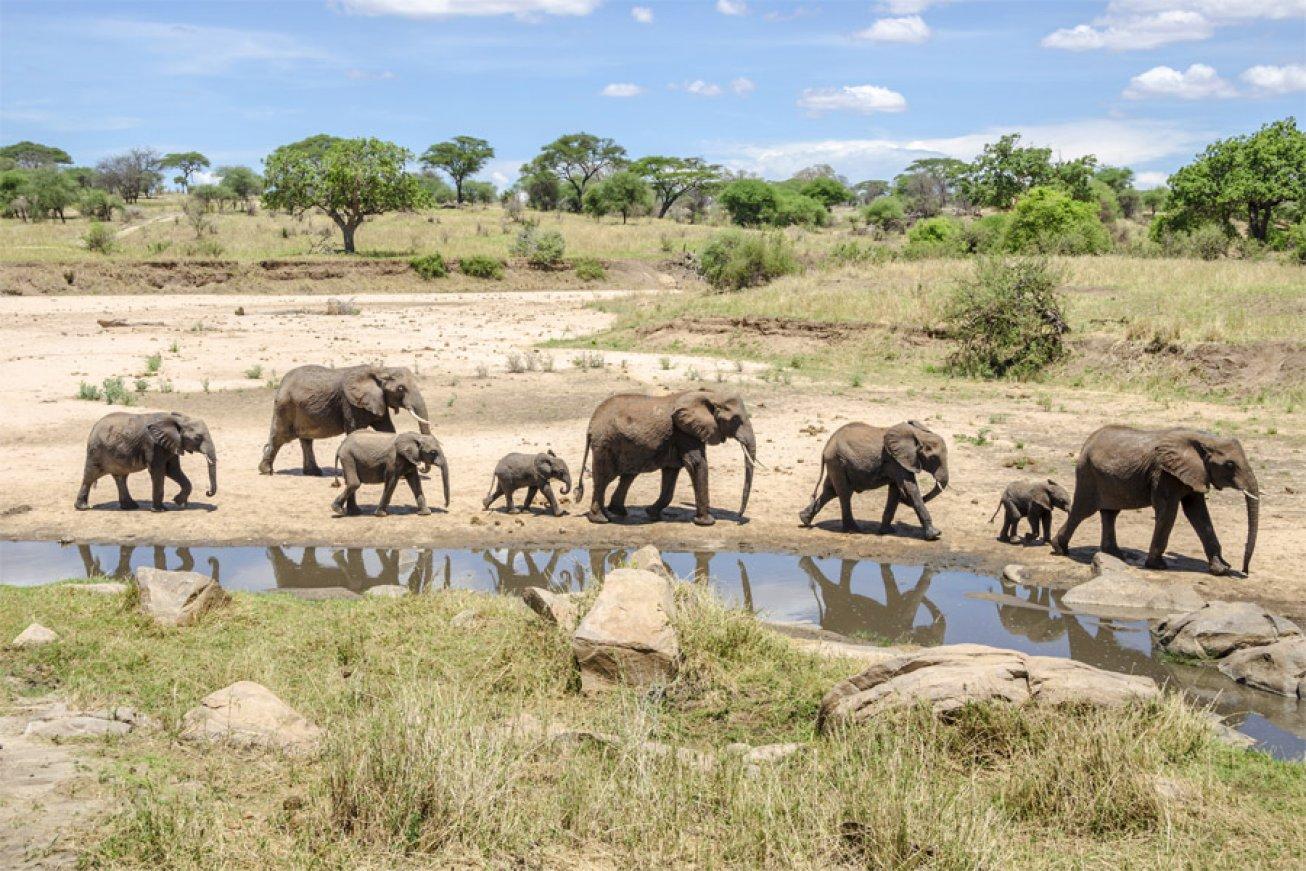 © African Safari