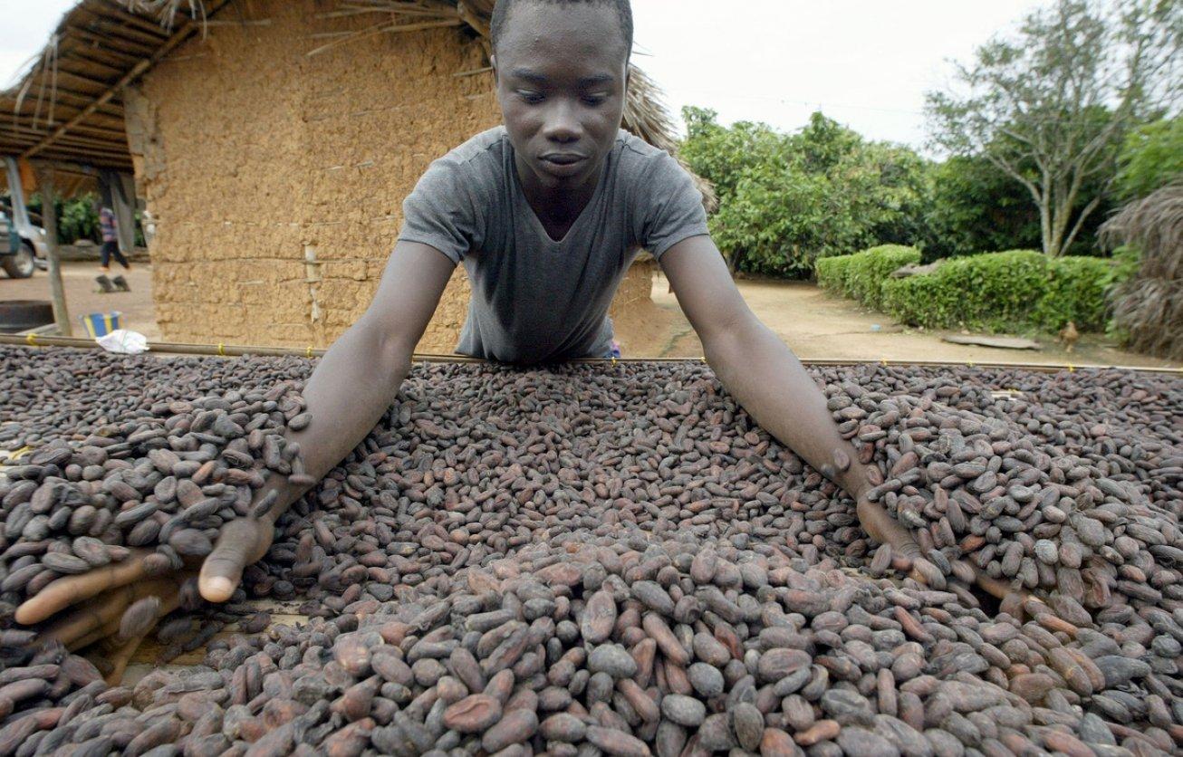 (illustration) Un ouvrier manipule des fèves de cacao en Côte d'Ivoire en 2003. © ISSOUF SANOGO / AFP